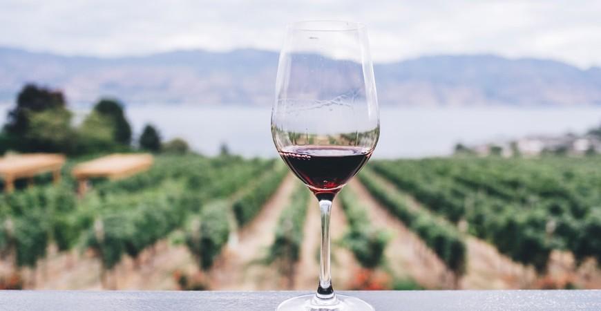 Las Indicaciones Geográficas del vino